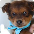 Adopt A Pet :: Frankie