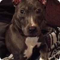 Adopt A Pet :: Nakita - Justin, TX