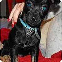 Adopt A Pet :: Mojo - Los Angeles, CA