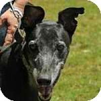 Adopt A Pet :: NuNu - Rancho Santa Margarita, CA