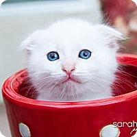 Adopt A Pet :: Carlton - Irvine, CA