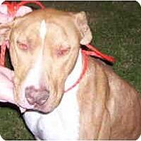 Adopt A Pet :: CIMARRO - Malibu, CA