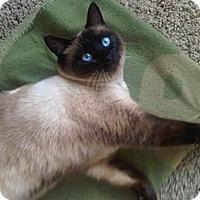 Adopt A Pet :: Nesumi - Davis, CA