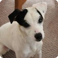 Adopt A Pet :: Libby - Lebanon, ME