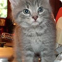 Adopt A Pet :: Max - Acme, PA
