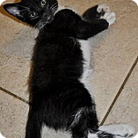 Adopt A Pet :: Oreo (Has heart on his leg!) - New Smyrna Beach, FL