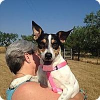 Adopt A Pet :: Jinnet in San Antonio - San Antonio, TX