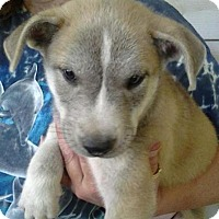 Adopt A Pet :: Jay - Medora, IN