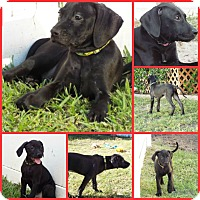 Adopt A Pet :: HANSI GREEN - Inverness, FL