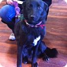 Adopt A Pet :: Freida