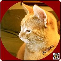 Adopt A Pet :: Duncan - Mt. Prospect, IL