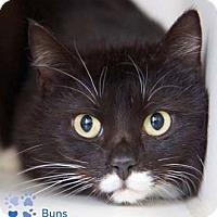 Adopt A Pet :: Buns - Merrifield, VA