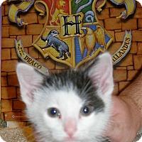 Adopt A Pet :: Mandrake - Union, KY