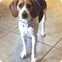 Adopt A Pet :: Katie - Palm Bay, FL