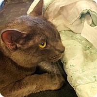 Adopt A Pet :: Smokey - Arcadia, CA