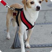 Adopt A Pet :: Ben - Encino, CA