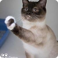 Adopt A Pet :: Gaston - Merrifield, VA
