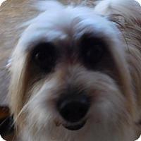 Adopt A Pet :: Franklin - MINNEAPOLIS, KS