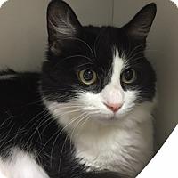 Adopt A Pet :: Sylvia - Medina, OH