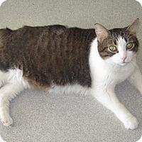 Adopt A Pet :: Gus - Toledo, OH