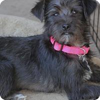 Adopt A Pet :: Frick - Woonsocket, RI
