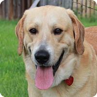 Adopt A Pet :: Sherlock Holmes - Westminster, MD