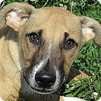 Adopt A Pet :: Clark - Germantown, MD