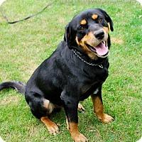Adopt A Pet :: Jasper - Brooklyn Center, MN