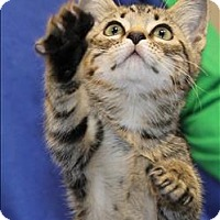 Adopt A Pet :: Curry - San Luis Obispo, CA