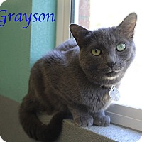 Adopt A Pet :: Grayson - Bradenton, FL