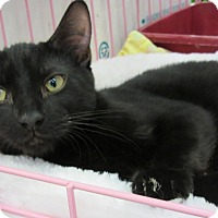 Adopt A Pet :: Susie - Roseville, MN