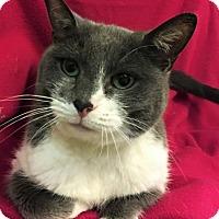 Adopt A Pet :: Toby - Colorado Springs, CO