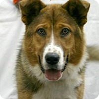 Collie Mix Dog for adoption in Newport, Kentucky - Skylar