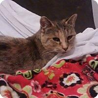 Domestic Shorthair Cat for adoption in Wasilla, Alaska - Maisy