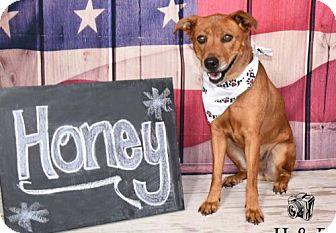 Shepherd (Unknown Type) Mix Dog for adoption in Amherst, Ohio - HONEY