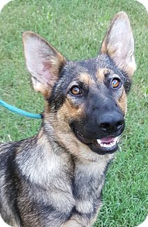 German Shepherd Dog Dog for adoption in Alpharetta, Georgia - Ruby Slippers