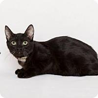 Adopt A Pet :: JOEL - Westlake, CA