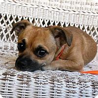 Adopt A Pet :: Bug - Newnan, GA