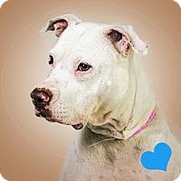 Adopt A Pet :: Shelby - Prescott, AZ