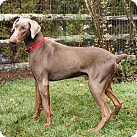 Adopt A Pet :: BUTTERED RUM - Greensboro, NC