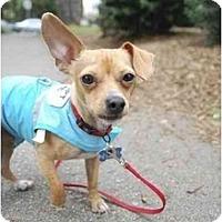 Adopt A Pet :: Bernard - San Francisco, CA