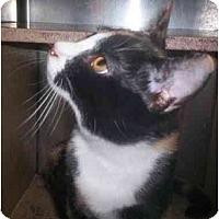 Adopt A Pet :: Marmalade - Richmond, VA
