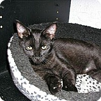 Adopt A Pet :: Desi - New Port Richey, FL