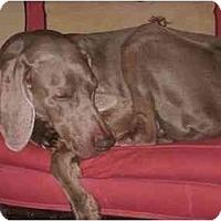 Adopt A Pet :: Buddy - Attica, NY