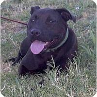 Adopt A Pet :: Mama - Sacramento, CA