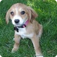 Adopt A Pet :: Baby Samantha - Marlton, NJ