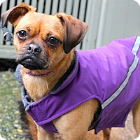 Adopt A Pet :: JADE~ADOPTED! - North Vancouver, BC