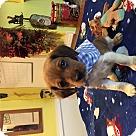 Adopt A Pet :: Sawyer