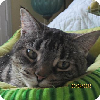 Declawed Cats For Adoption Ontario