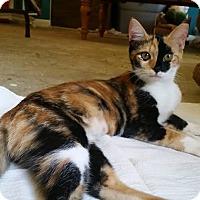 Adopt A Pet :: Gabby Abby - Ocala, FL